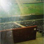 Ангел на стадионе ?!